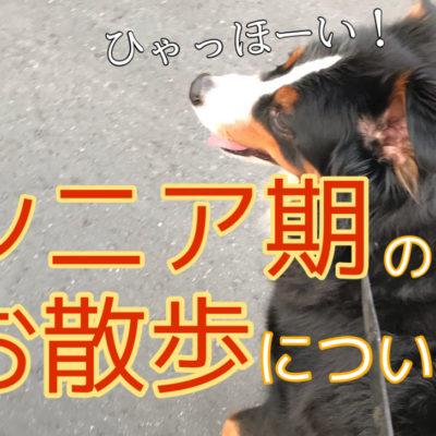 老犬になってもお散歩はやめないで!