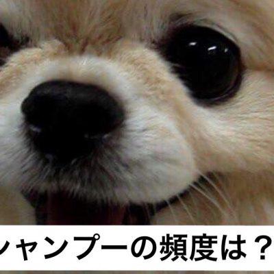 犬のシャンプーしないと?