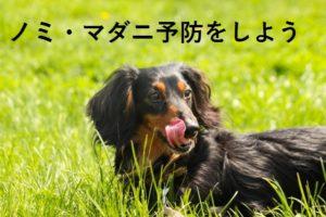 犬 ノミ マダニ 予防 駆虫薬 ノミマダニ