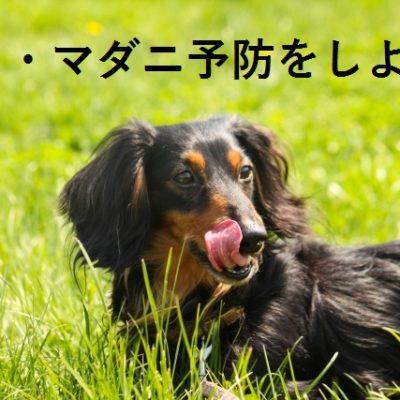 ノミ・マダニ予防をしよう!