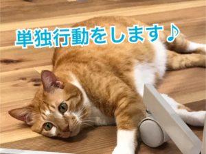 猫は単独行動!