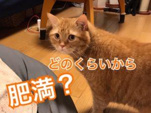 猫の肥満体型って?