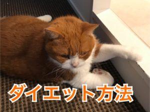 猫のダイエット!