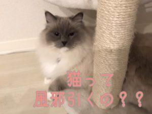 猫の風邪って?