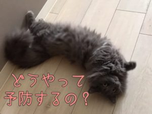 猫風邪予防できるの?