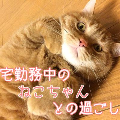 在宅中の猫